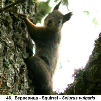 46-ververica